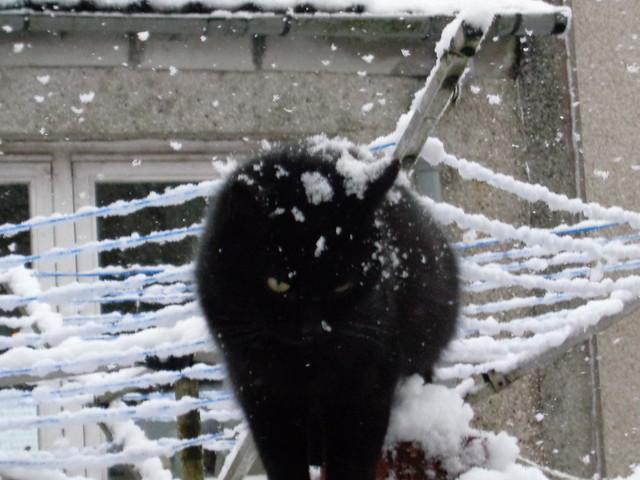 Ebony sampling unexpected snowfall