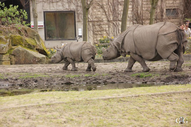 Besuch Tierpark Friedrichsfelde 17.04.201684
