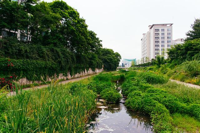 The Seoul Trail