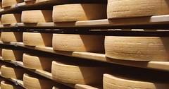 Exkurze - švýcarské sýrárny