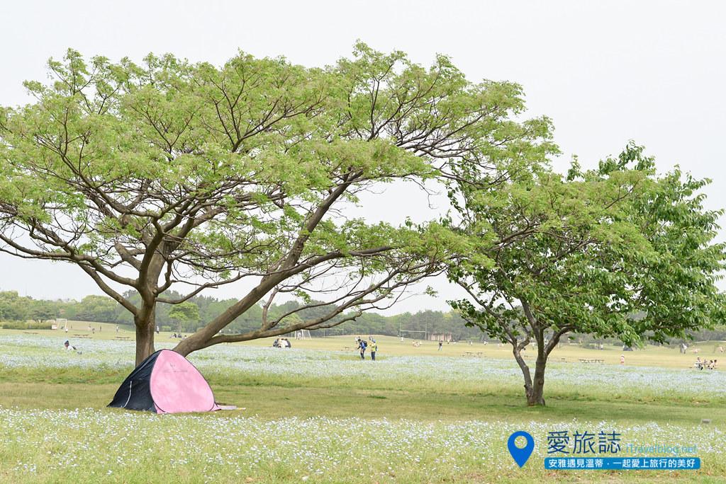 《福冈景点推荐》海之中道海滨公园:福冈亲近大自然的亲子景点与游乐区。