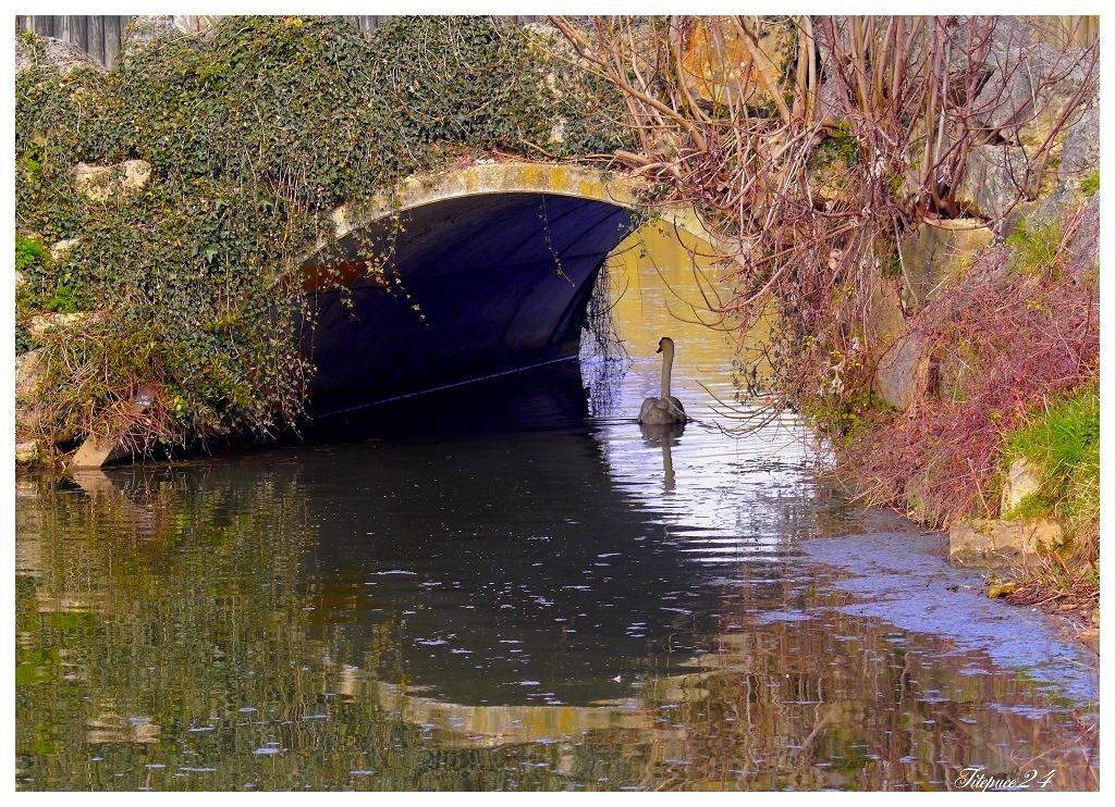 """L'oeil du vieux pont 1 et 2 et correction """" peps """" de la 1 16162925744_1475916d4b_o"""