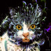 (2075) Cat by QuimG