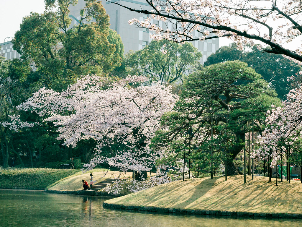 Koishikawa Korakuen Garden during the cherry blossom season