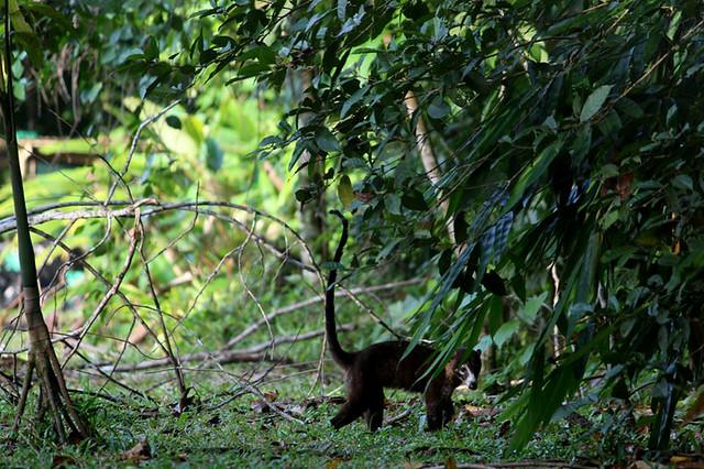 Osa Conservation Animals