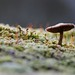 Tiny mushroom on a hoarfrost morning in March by :Linda: (OFF for a longer while)