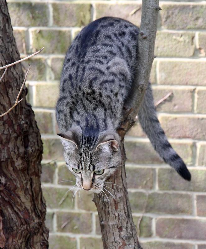 Gabriel Climbing and Watching