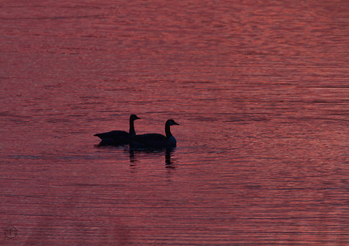 nature birds sunrise canon reflections march wildlife edwardsville 2015 eos7d watershednaturecenter