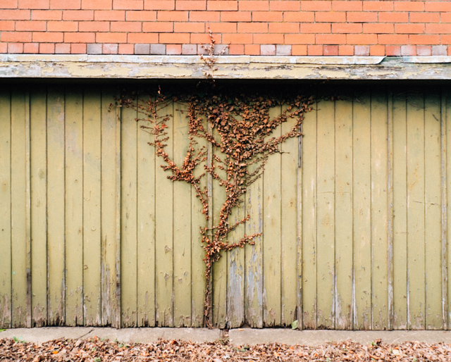 ivy growing on green garage door