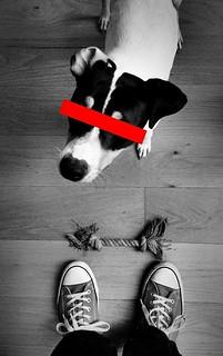 meet my dog Spot
