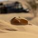 Tunesia 2015: Micro Sandstorm