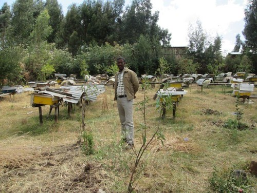 Fufa with his beehives in Adaberga (Photo:ILRI\Gemeda Duguma)