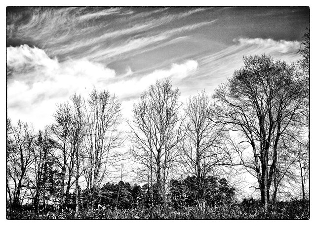 IMG_2441 Trees at Audubon for Cyanotype 5x7