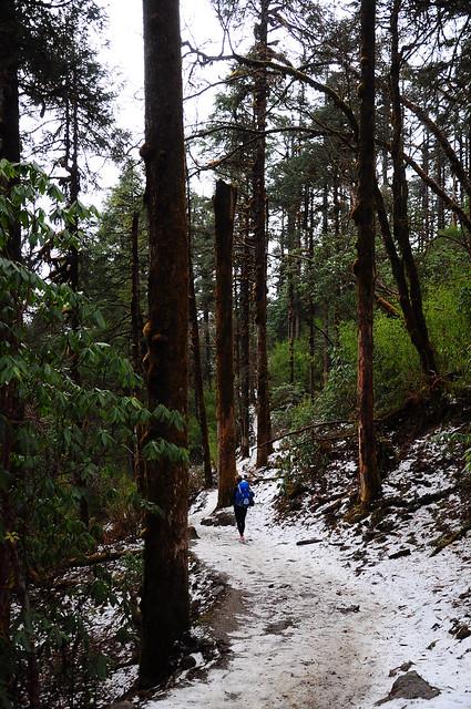 Pooh hill trekking - Joukje 12 - via TinyBlackBird.com