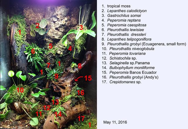 terrarium update 5.11