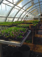 Comin' alive in the greenhouse.