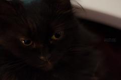 Latina Cat !