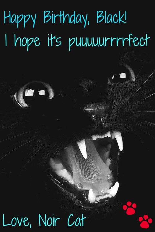 38405-Black-Cat-Meow