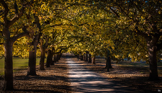 Autumn is Comimg
