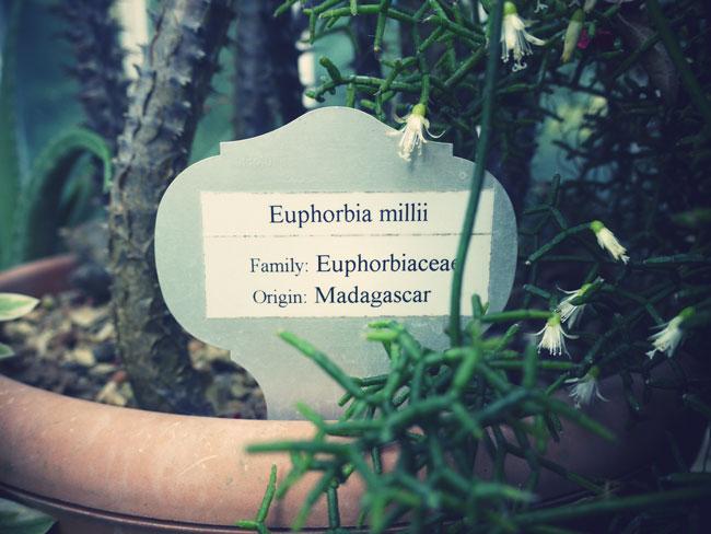 botanical-gardens-belfast