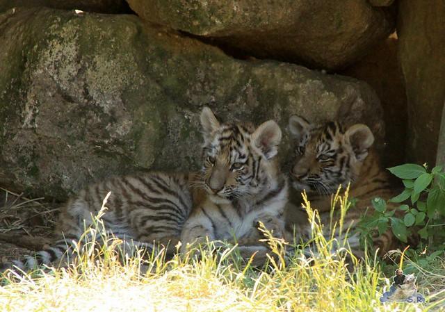 Zoo Eberswalde 04.06.2011 105