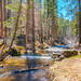 Peaceful creek in Greer, AZ by stimpy77