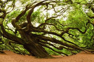 distorted tree