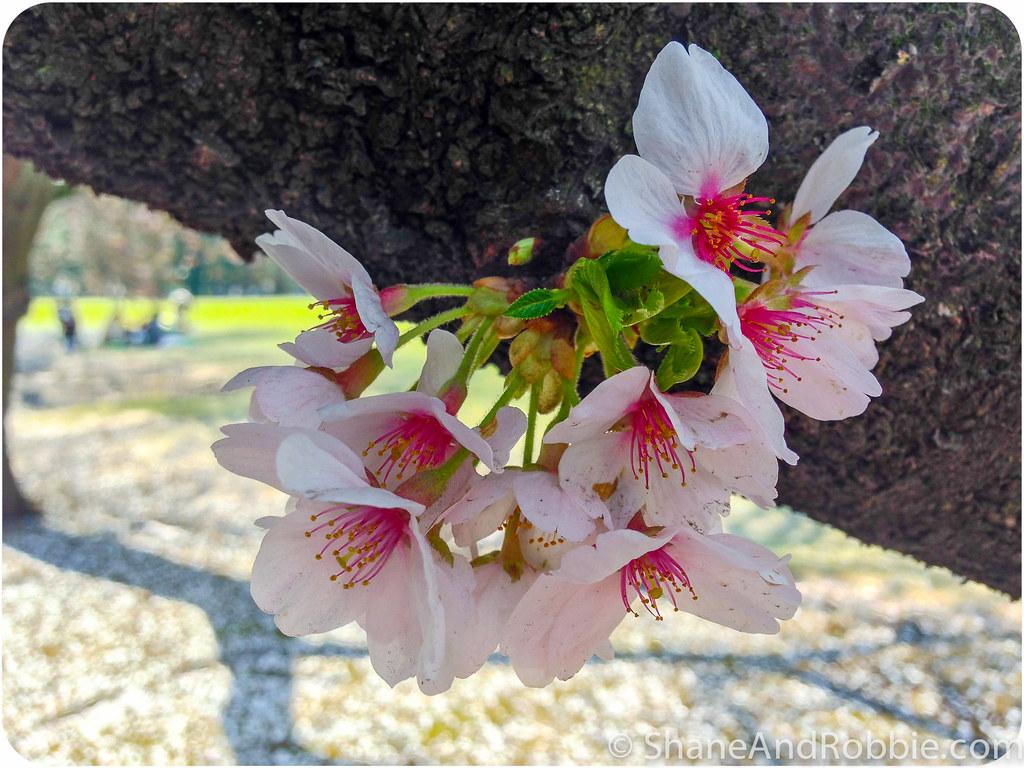 2015-04-06-20150406(iPhone 5)-00074