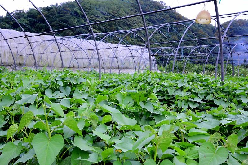 宜蘭景點頭城農場螢火蟲兩天一夜行程推薦 (64)