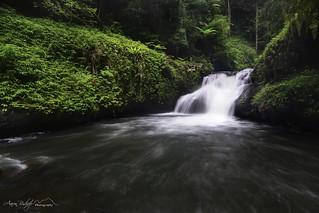 ~ Wongaree Falls ~ Lamington National Park, Queensland, Australia.