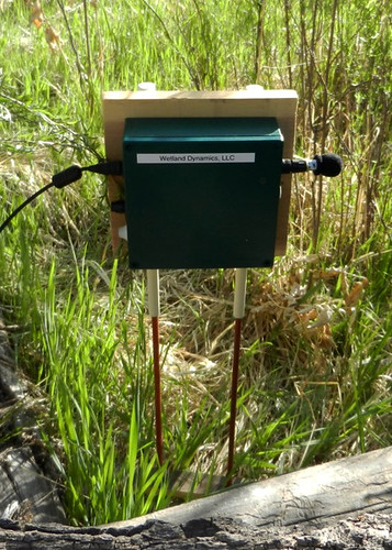 By recording the birds' noises, Wetland Dynamics is able to study the endangered Southwestern willow flycatcher. Photo courtesy of Wetland Dynamics.