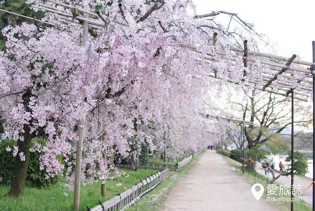 京都赏樱景点 半木之道 40