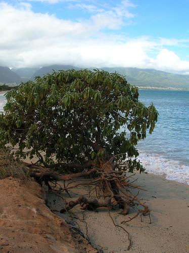 Kanaha-Beach_erosion_2004