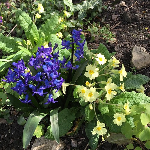 Spring in full swing in somerset #nofilter