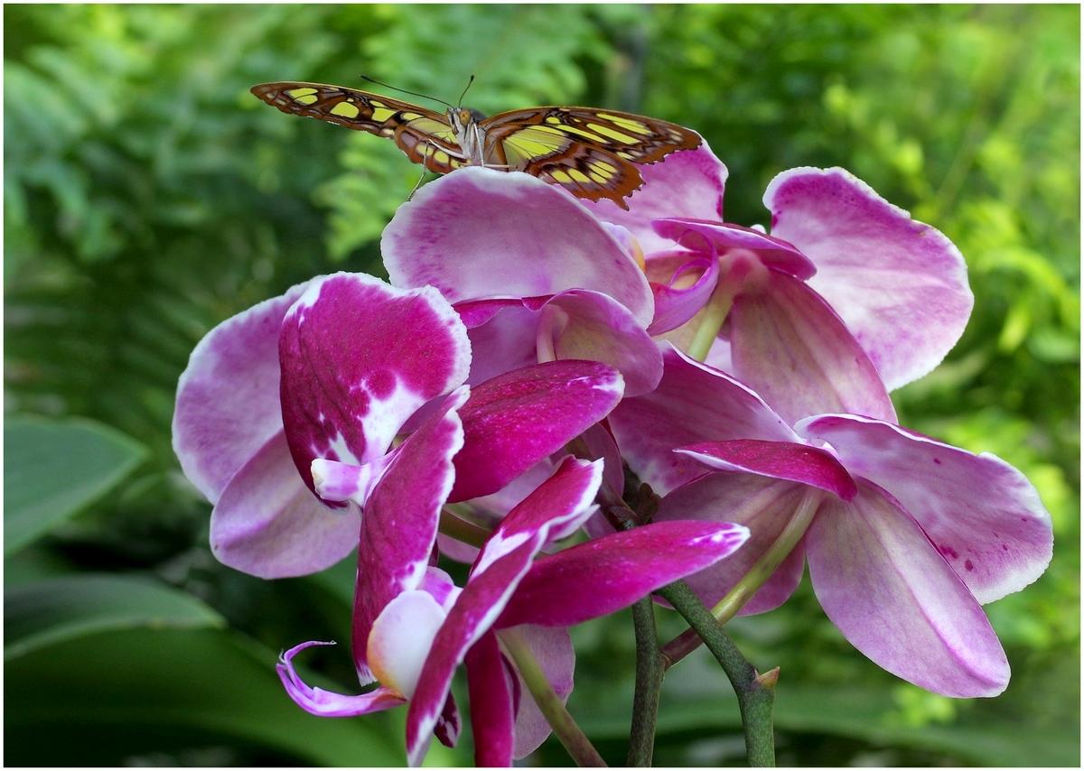 Papillons en Fêtes 2015 17009978832_0e0fe6015e_o