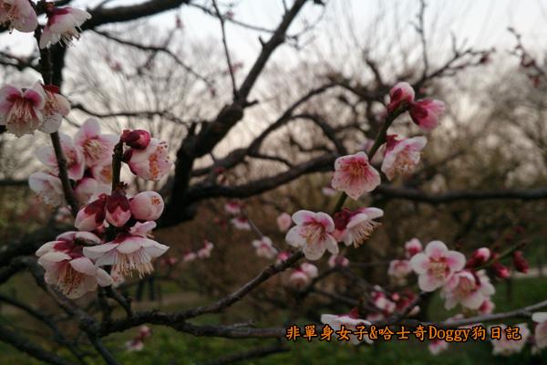 日本大阪城公園梅林城天守閣3D光之陣06