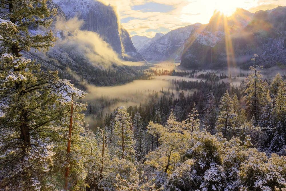 Golden Morning in Yosemite Valley