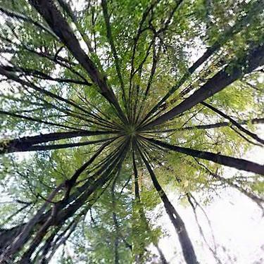 Forestsweb