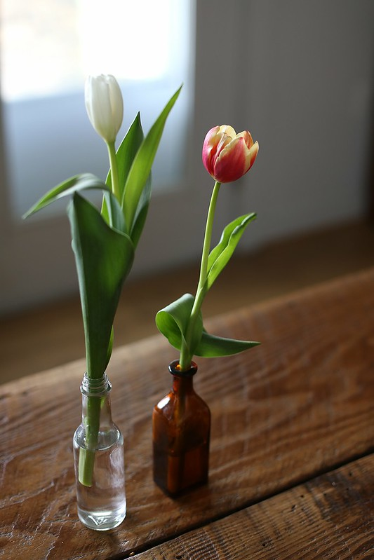 tulips from K and L