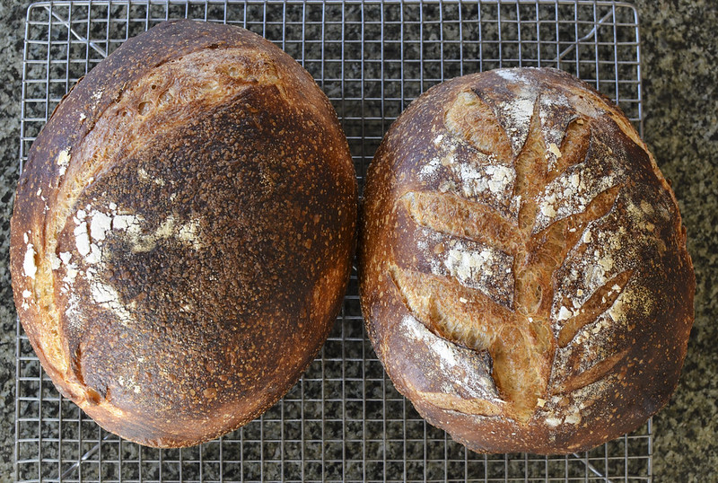 Sourdough_008_T
