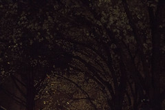 IMG_6254
