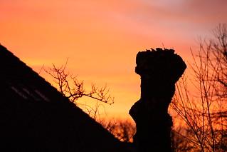 Baumstumpf im Morgenrot
