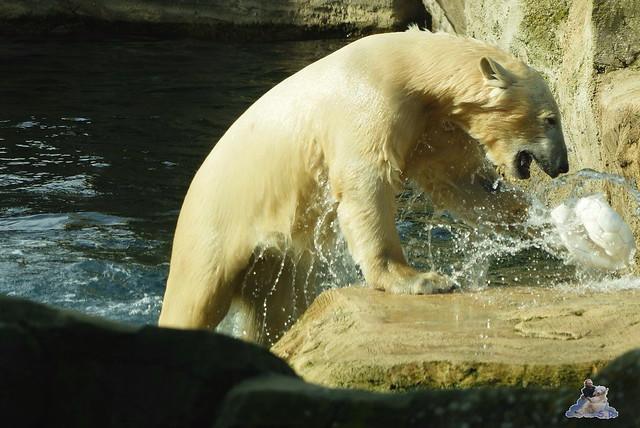Zoo am Meer 07.03.2015   63