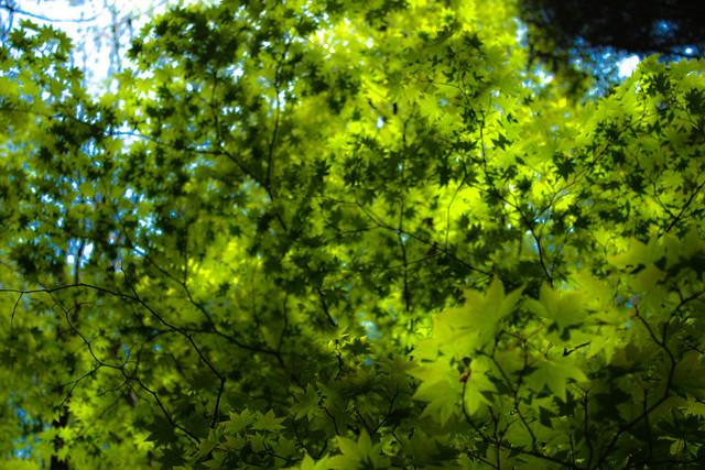 2014-05-06_02623_九州登山旅行.jpg