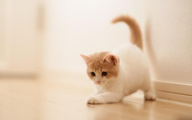 kitten-Widescreen-Wallpaper
