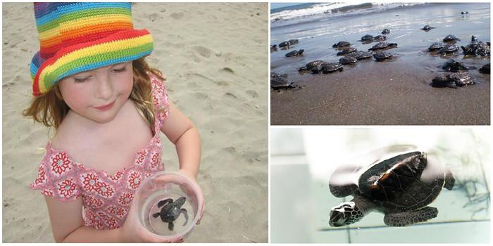12-turtles1-via Pinterest-by oceanmum, theavidphotographer.wordpress, simplygiving