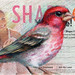 Shape Finch by PS pics