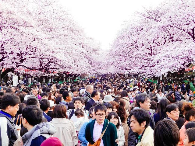 Hanami at Ueno Park 2013