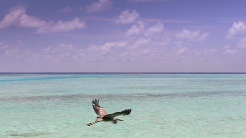 resort maldives veli anantara malè maxbcc