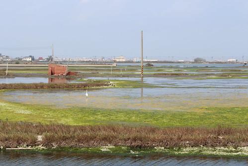成龍村多水多湖,重要濕地身分未公告,面臨開發威脅,當地居民成立自救會表達不願溼地變屍地的訴求。